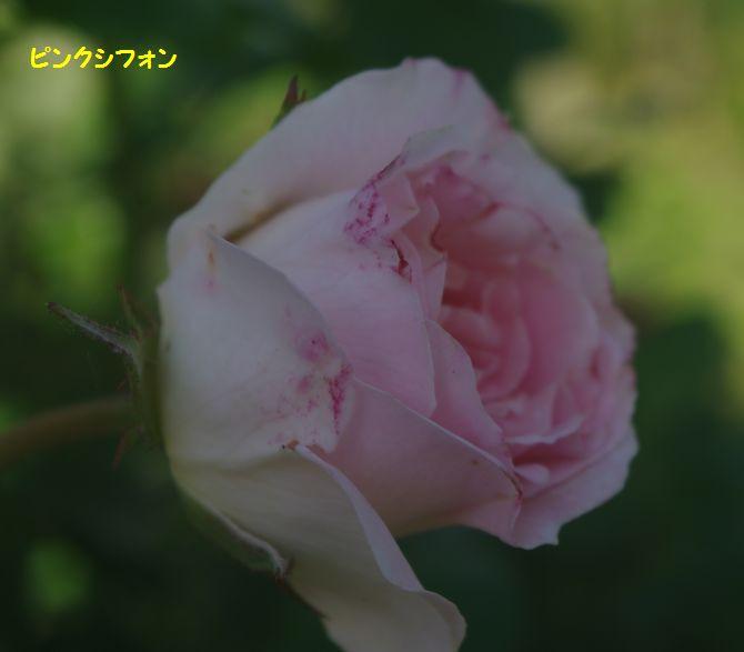 IMGP1981.JPG