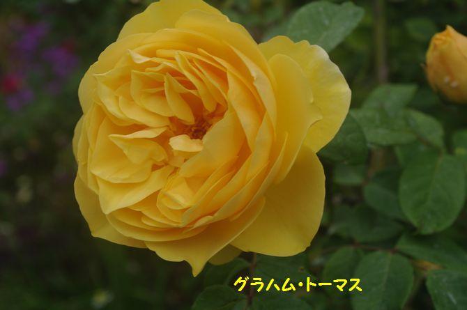 IMGP2169.JPG
