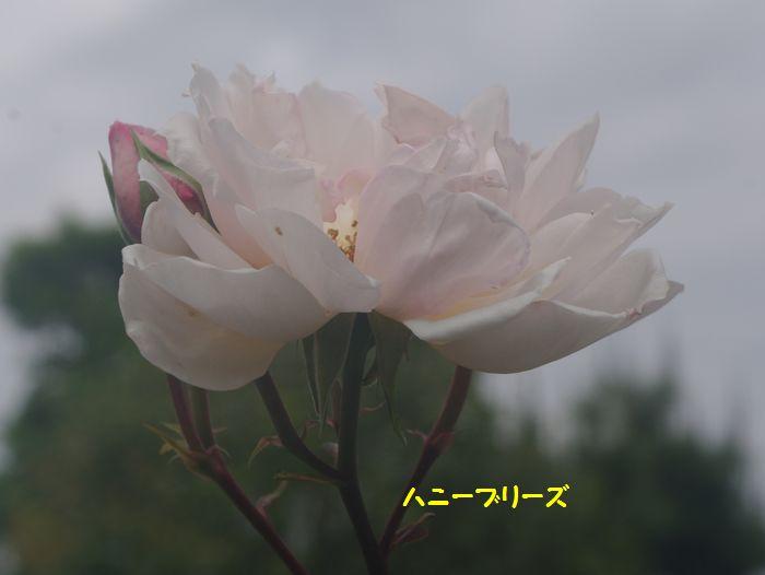 IMGP5424.JPG