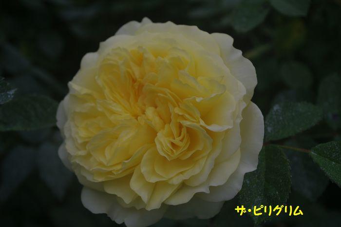 IMGP5522.JPG