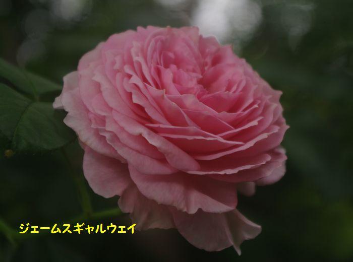 IMGP5623.JPG