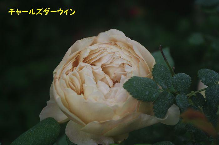 IMGP5737.JPG