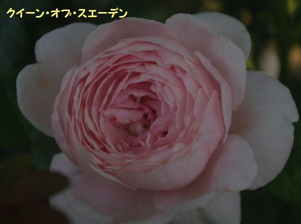 IMGP9887.JPG